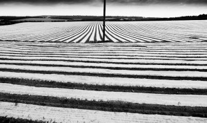 Patterns in the field