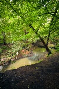 Swollen stream at Eckington