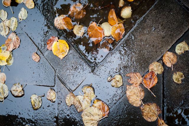 Autumn leaves....and RAIN!!