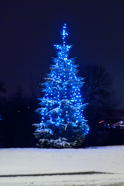 Tree on Slayley Green